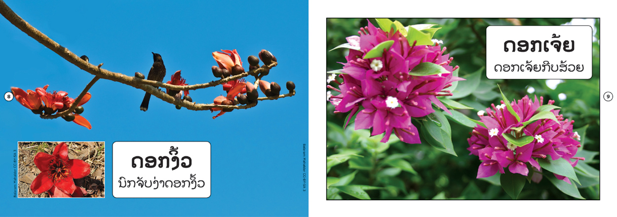 sample pages from Flowers That I Know, published in Laos by Big Brother Mouse