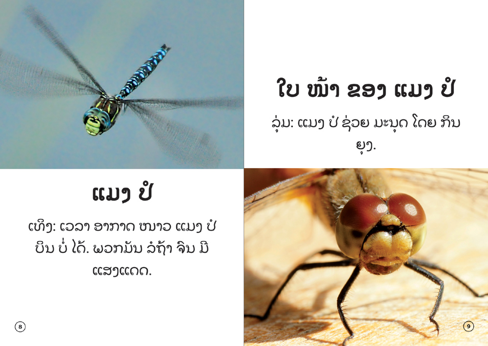 sample pages from The Insect That Uses Light to Talk, published in Laos by Big Brother Mouse