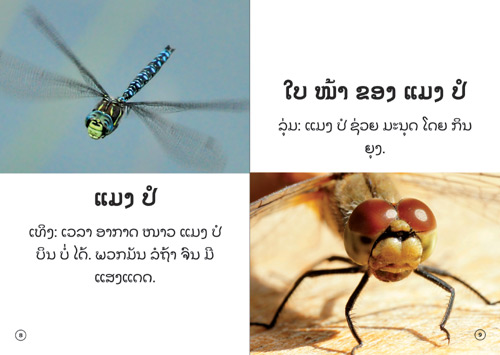 Samples pages from our book: The Insect That Uses Light to Talk
